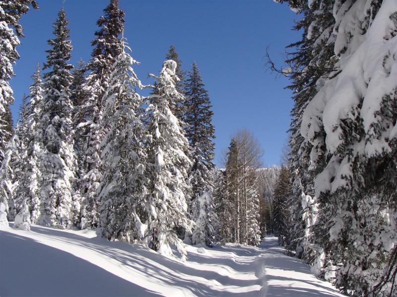 Monte Cristo area, Utah, 01/27/12-dsc07443-custom-.jpg
