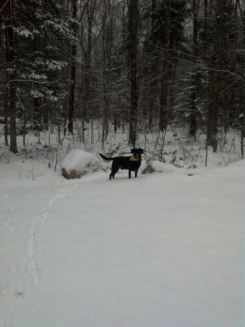 Snow in upstate N.Y.-uploadfromtaptalk1353959620583.jpg